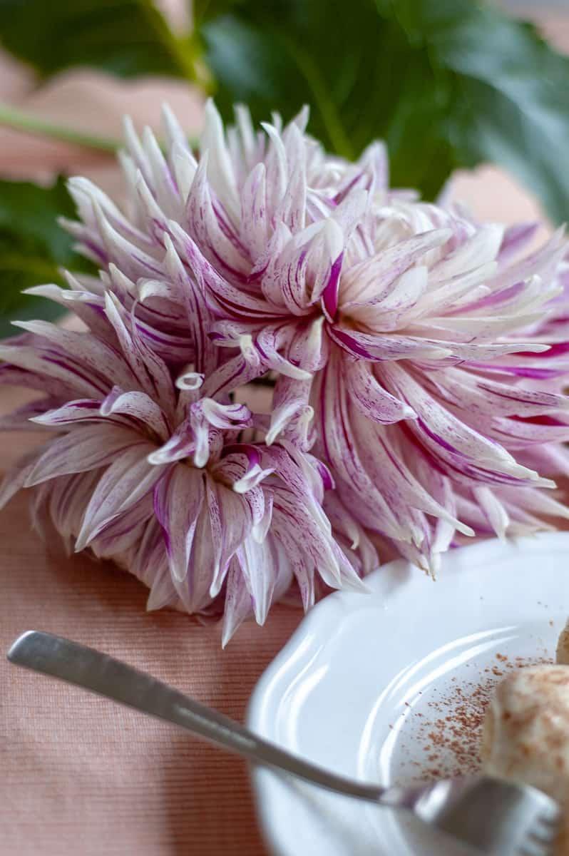białof-ioletowy kwiat