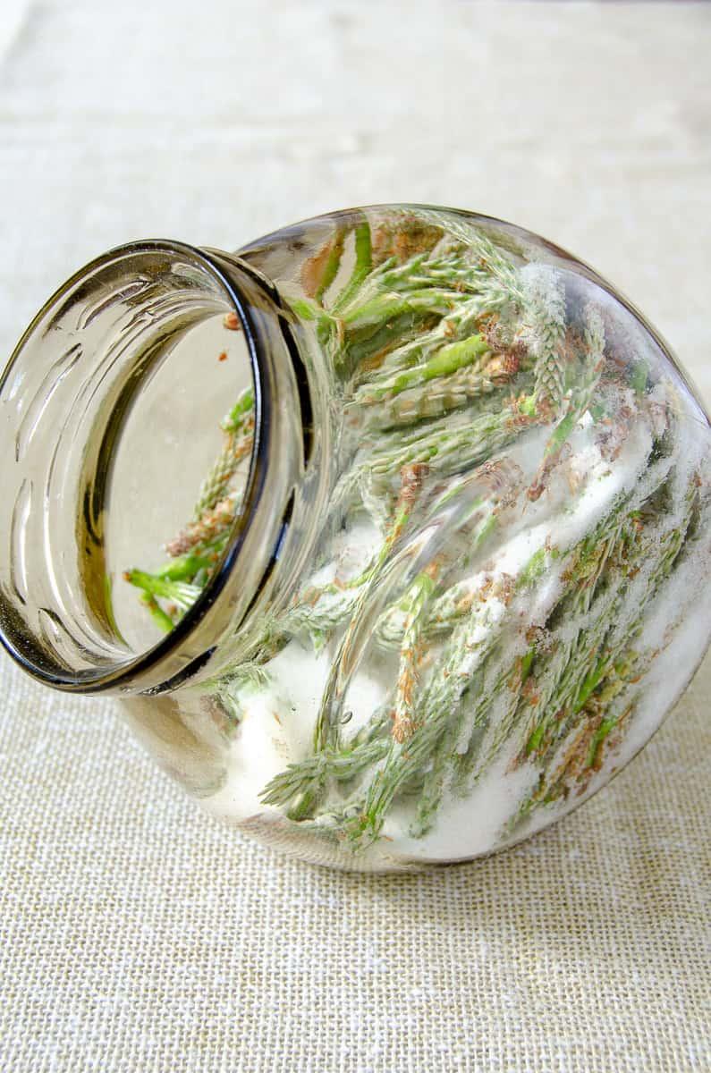 syrop z mlodych pedow sosny