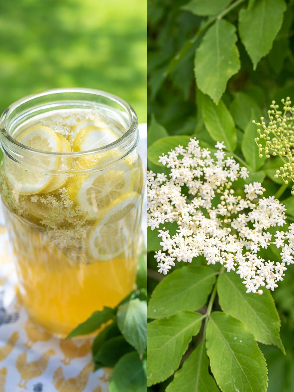 napoj z kwiatu czarnego bzu