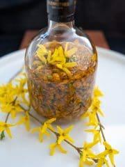 Nalewka z forsycji w pÄ™katej butelce w Å›rodku kwiaty forsycji.