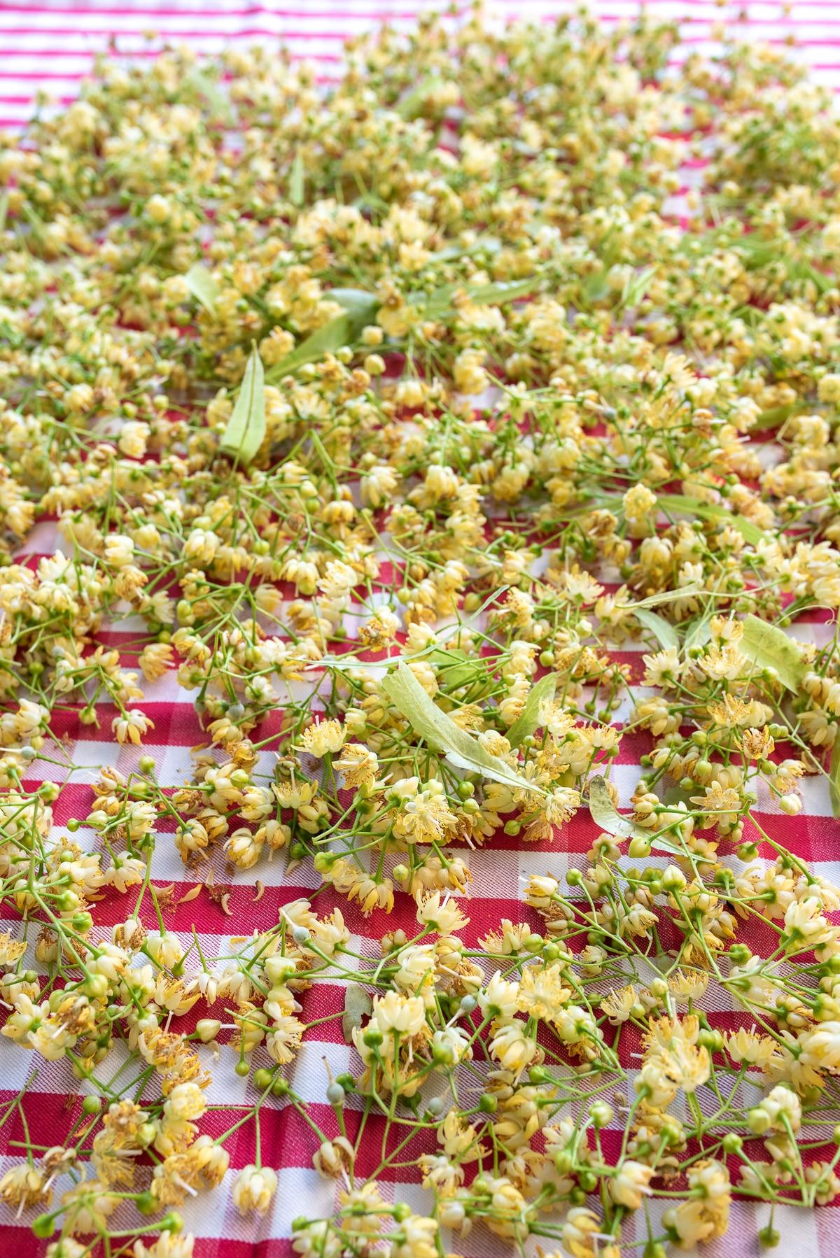 zerwane kwiaty lipy rozłożone na obrocie w kratkę